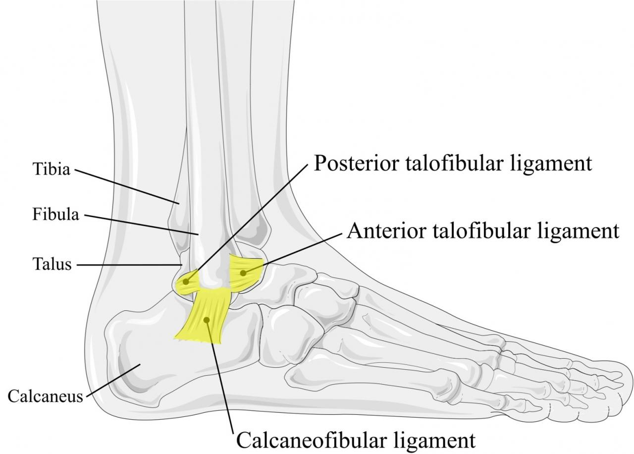 lateral ankle ligaments ankle taping